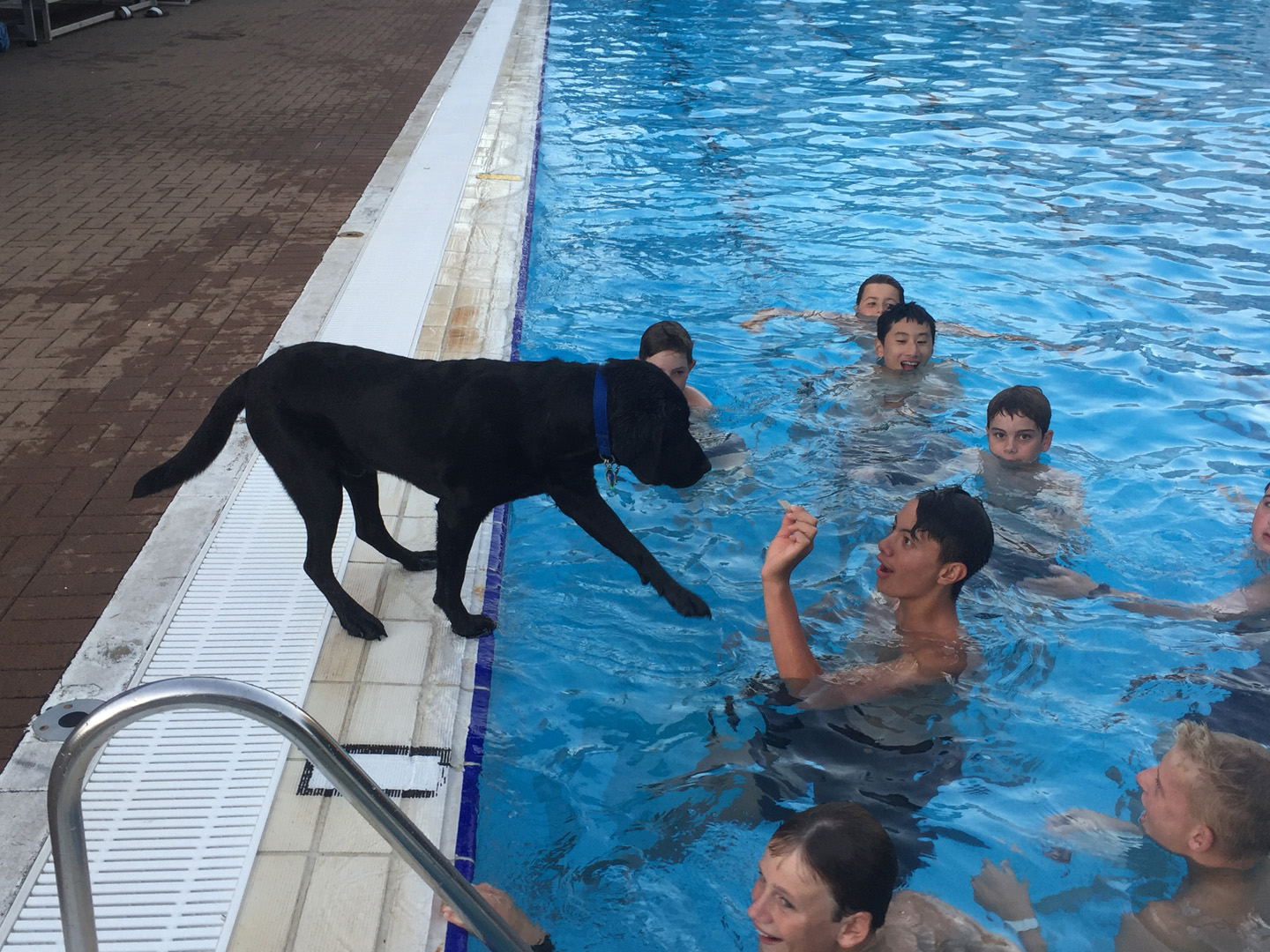 Boys Trying To Entice Rocco Into Pool