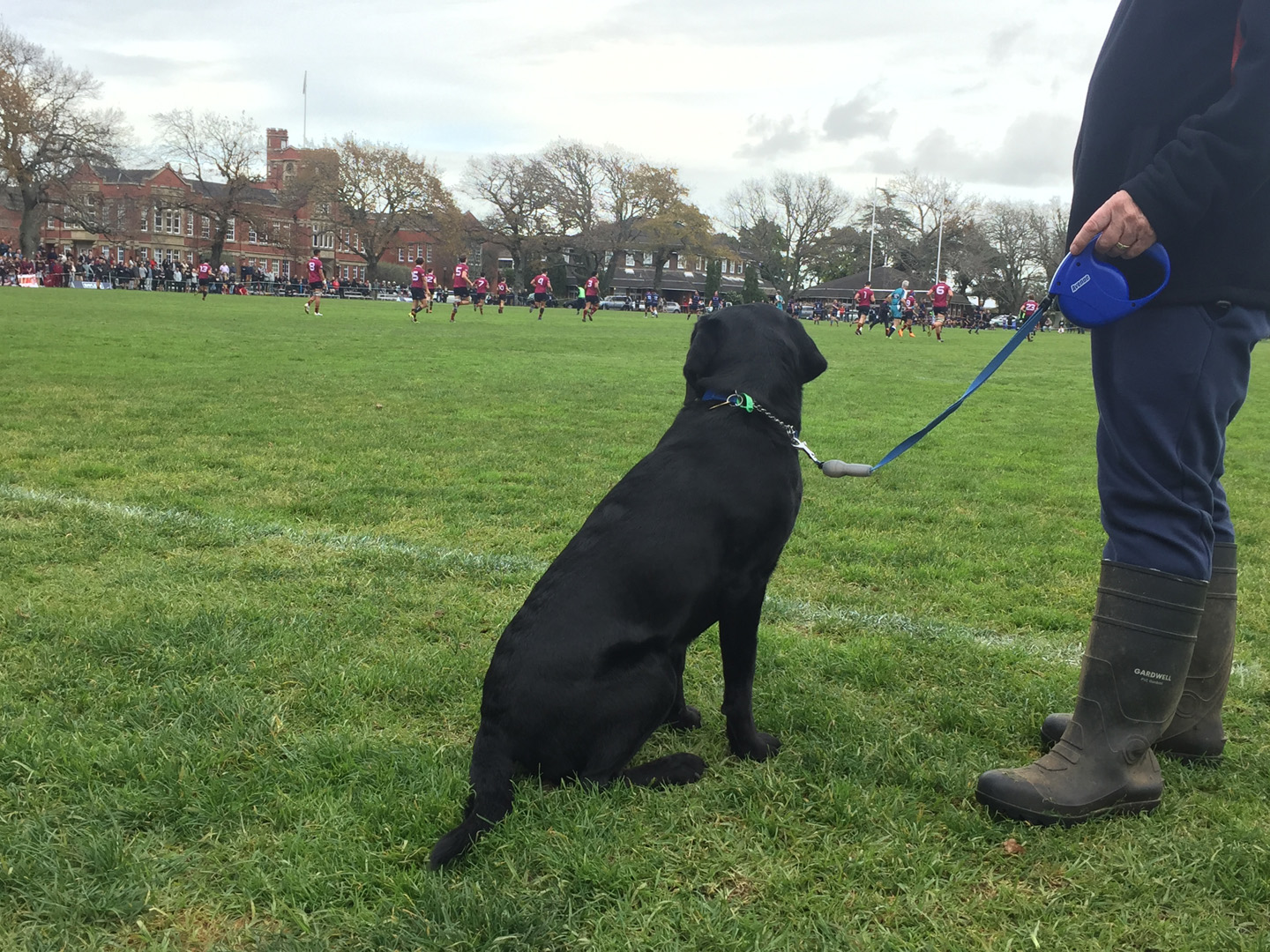 Rocco Watching 1St XV